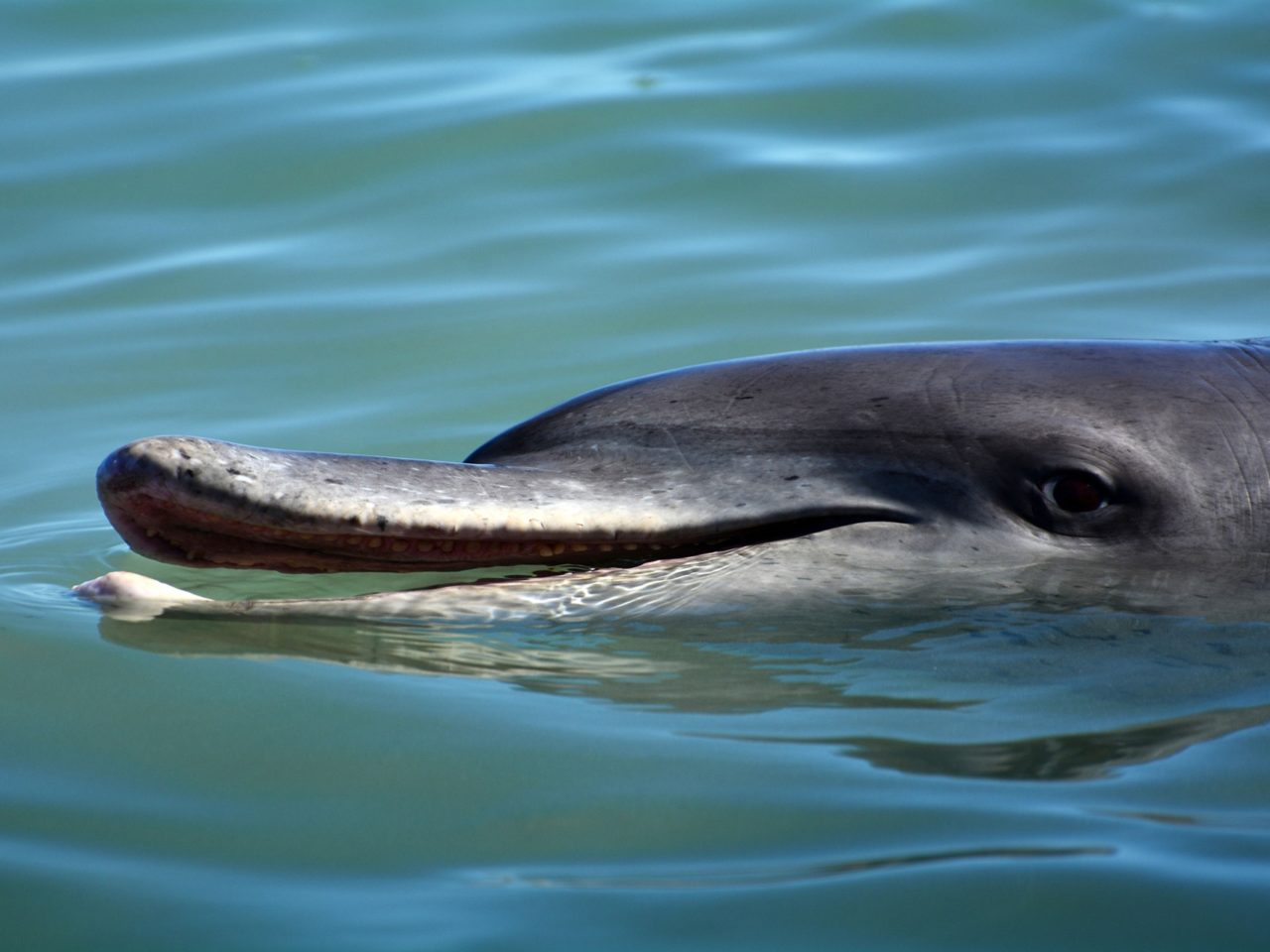 https://csjet.pl/wp-content/uploads/2021/06/Dolphin-Way-1280x960.jpg